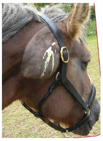 STRANGLES IN HORSES - Signs, Diagnosis, Treatment and Prevention