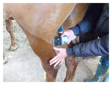 clipping hind_leg_line