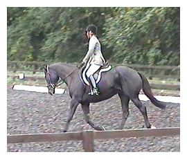 cropped york_dressage
