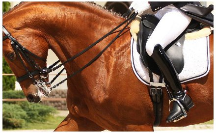 dressage and tack