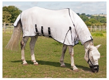 A horse with sweet itch with protective rugs