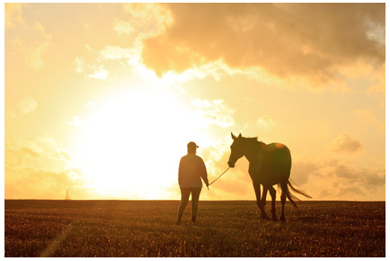 horse and person in sunset