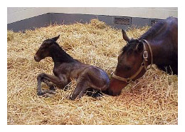 mare and_foal_down_on_straw