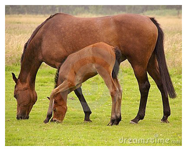 mare and_foal_grazing